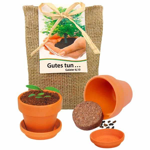 Robinie - Pflanze deinen Baum
